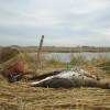 WATERFOWL DAILY REPORT 2012/2013 | Hunting Nebraska Outdoor Forums