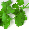 Huntingne Chuckwagon – Cilantro? What is it good for?