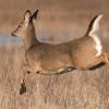 Special Deer Hunts at Mahoney SP, Platte River SP, Schramm Park SRA Being Offered