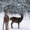 Deer Hunting Can Be Hot When Its Cold