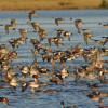 Want more opprotunity to hunt waterfowl in Eastern Nebraska…Heres your chance to speak!!
