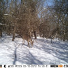 2012 Trail Cam Pictures   Hunting Nebraska Outdoor Forums