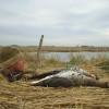 WATERFOWL DAILY REPORT 2012/2013   Hunting Nebraska Outdoor Forums